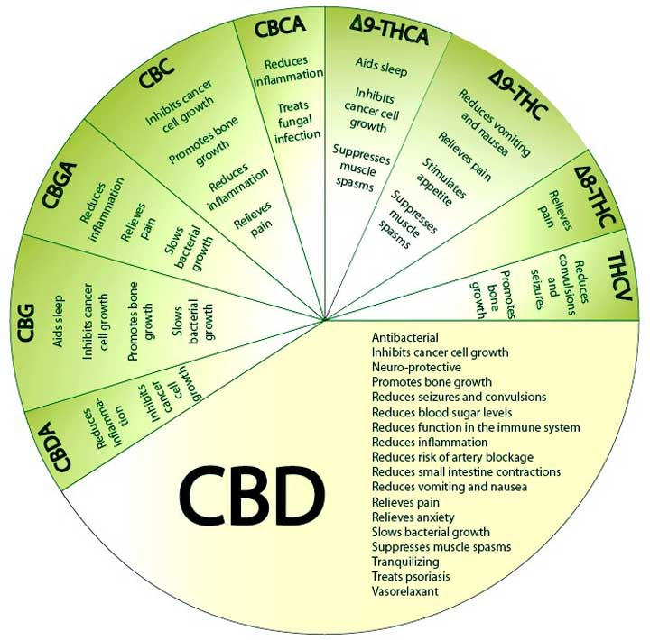 Diagram Of Medical Marijuana Health Benefits