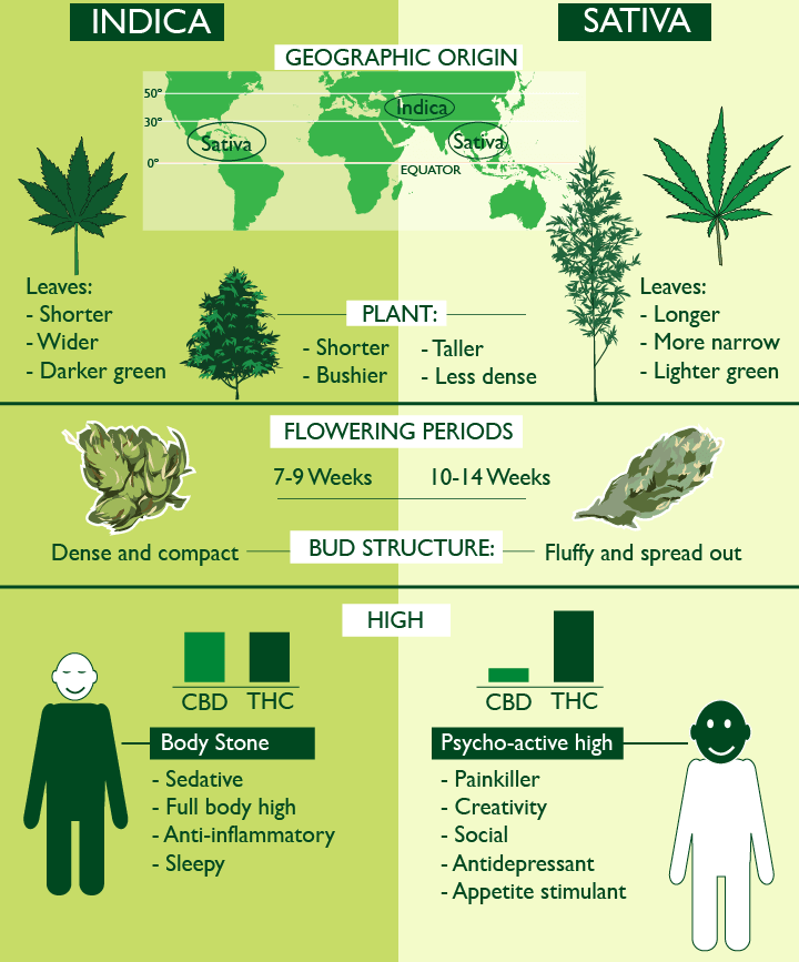 Differences Between Indica and Sativa