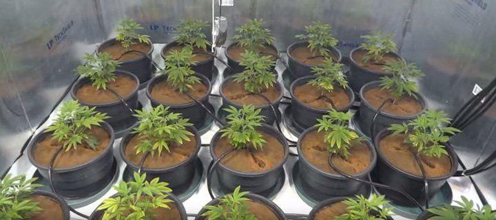 drip feed hydroponic system