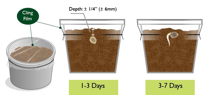 Wiet Zaden Ontkiemen Methode 1 - In Aarde