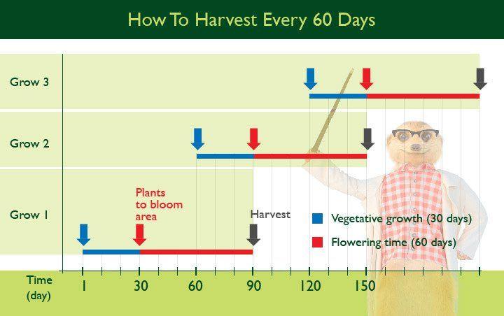 Maat Pot Voor Wietplant