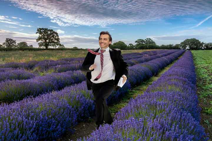 de geur van lavendel komt ook door terpenen