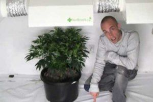 When do you water your marijuana plant?