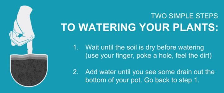 finger in soil to test if the cannabis plant needs water