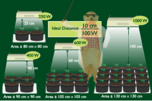 How To Yield More From The Same Grow Lights