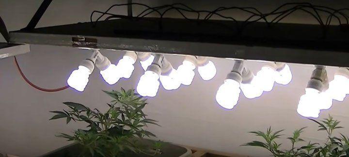 Wiet Kweken Met Spaarlampen