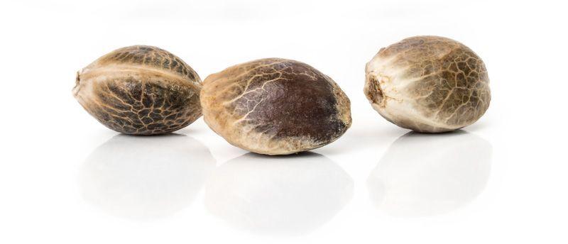 nice looking cannabis seeds