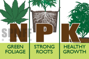 Medicinale Cannabis en Plantenvoeding