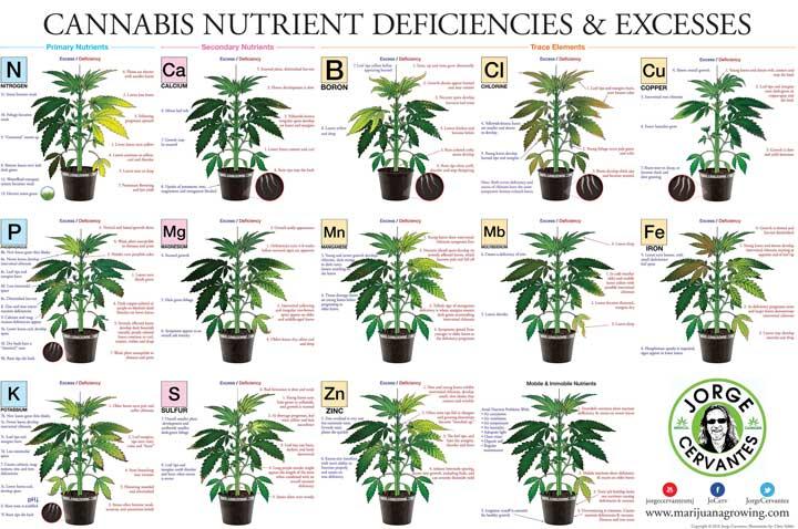 Cannabisplant Tekorten
