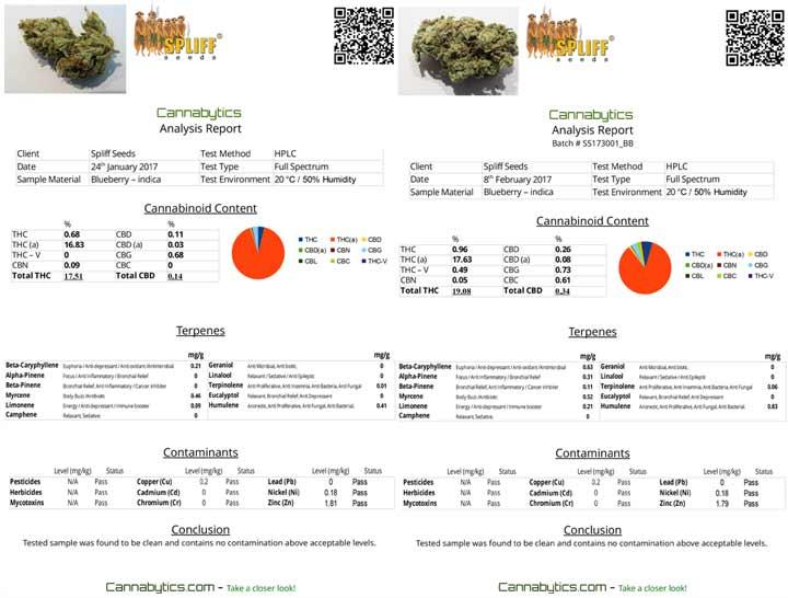 Twee Cannabis Test Verslagen Van Dezelfde Soort
