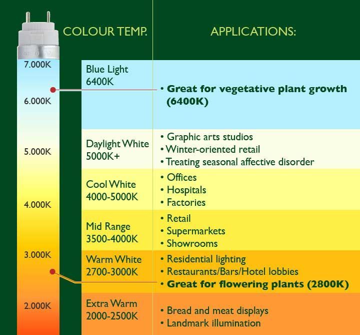 best kelvin colour code for growing cannabis