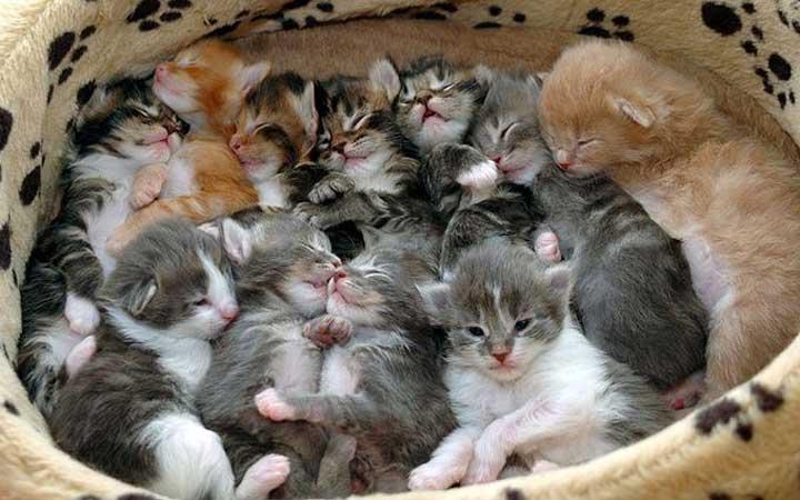 Katten Van Dezelfde Ouders Zien Er Toch Anders Uit!
