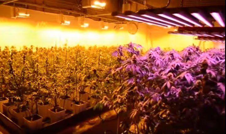 led and hps grow