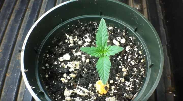 Dit kleine plantje heeft nog geen 1000W aan stroom nodig