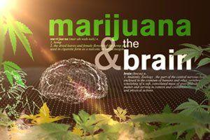 Medicinale Wiet En De Hersenen