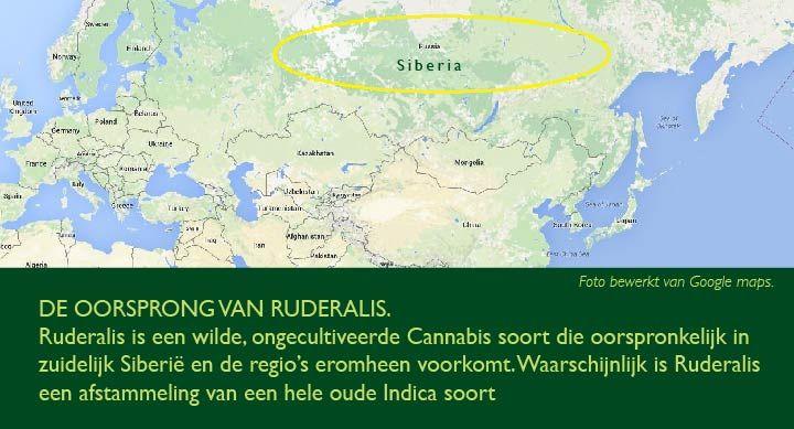 Europese Ruderalis soorten komen oorspronkelijk uit Siberië.