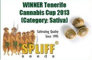 Cannabis Cup Tenerife 2013