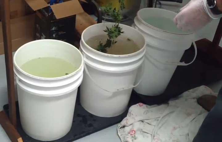 Stappenplan Om Wiet Te Wassen