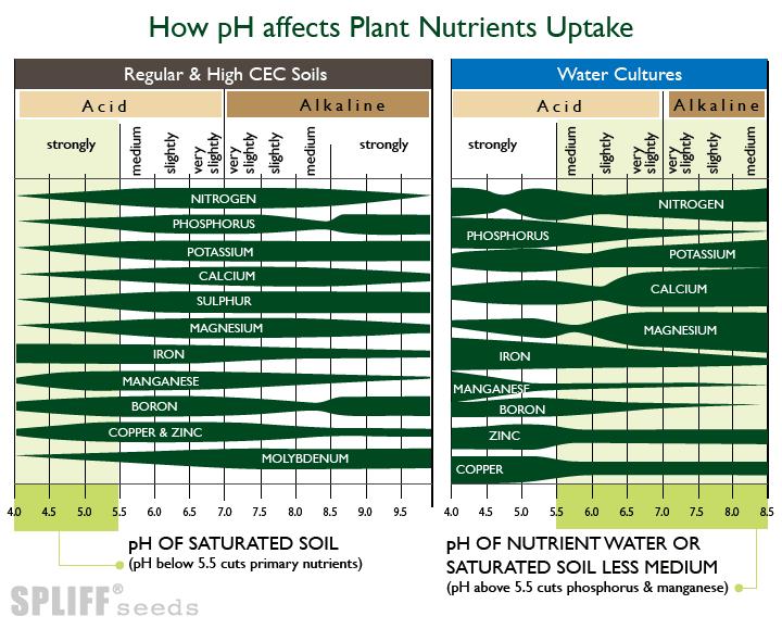voedingsoplosbaarheid voor het kweken van medicinale cannabis